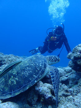 石垣島でのんびりダイビング「大物狙い」ヒートハートクラブ