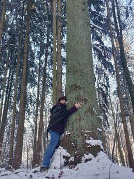 Baum umarmen
