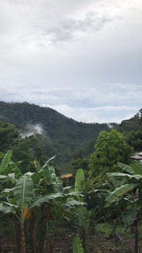 Impressionen zum Kaffeeanbau auf der Farm. Viel Handarbeit, alles biologisch.