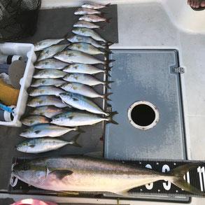 ブルーアクエリアスで釣れた112.5cmのヒラマサ