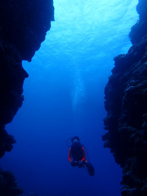 石垣島でのんびりダイビング「ダイナミック東海岸」ヒートハートクラブ