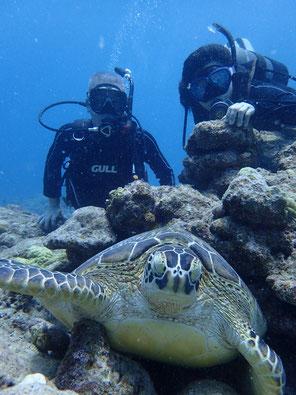 石垣島でのんびりダイビング「海亀祭り」ヒートハートクラブ