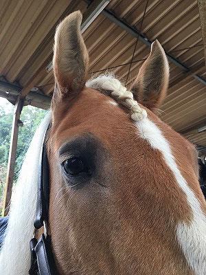 馬の前髪編み