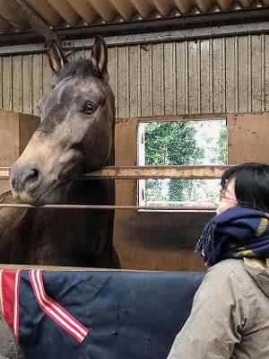 馬と話し合え、耳を傾けろ