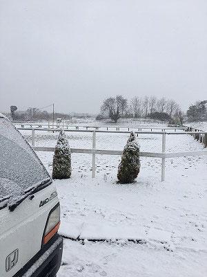 乗馬クラブの雪