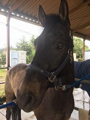 馬を愛する気持ちに応えたい