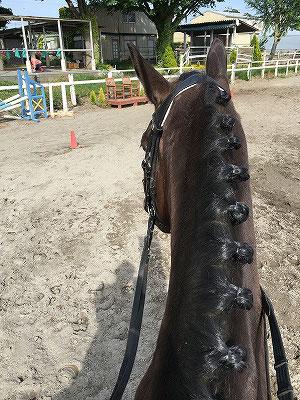 馬のドレスアップ