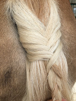 馬のたてがみ編み尻尾編