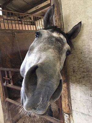 可愛くて性格の良い馬作り