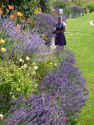 Lavendel Seminar
