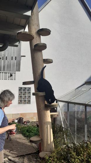 Wendeltreppe für Katzen