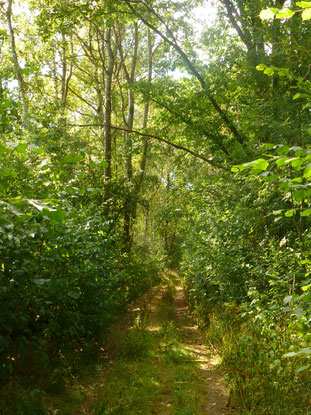 Wanderweg durch den Auwald. Foto: ÖNSA/ M. Neßmann
