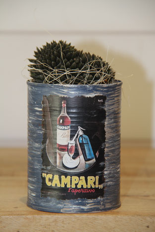 campari dose büchse sukkelente pflanze