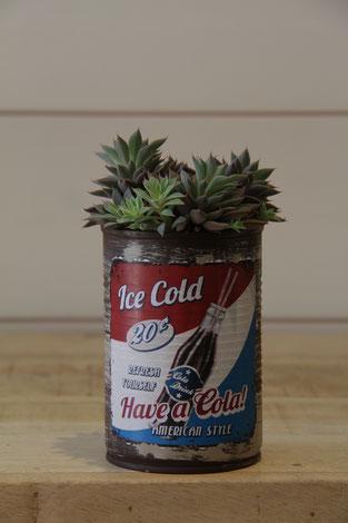 ice cold have a cola dose büchse sukkelente pflanze