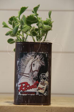 Jack Daniels whiskey dose büchse sukkelente pflanze