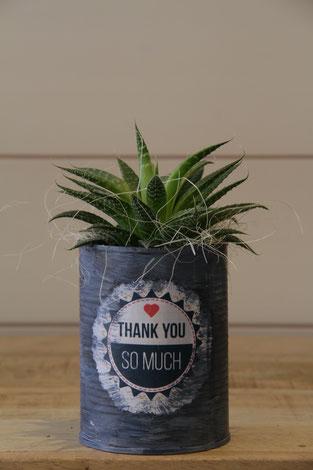 thank you so much vielen dank dose büchse sukkelente pflanze