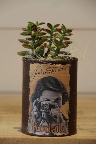 kodak fotokamera dose büchse sukkelente pflanze