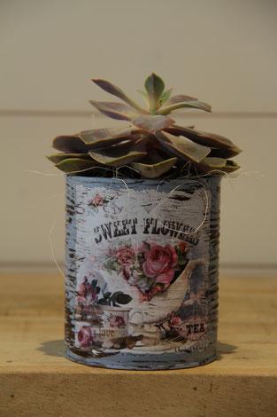 sewwt flowers rose dose büchse sukkelente pflanze