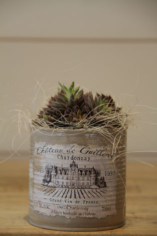 chardaonnay wein dose büchse sukkelente pflanze