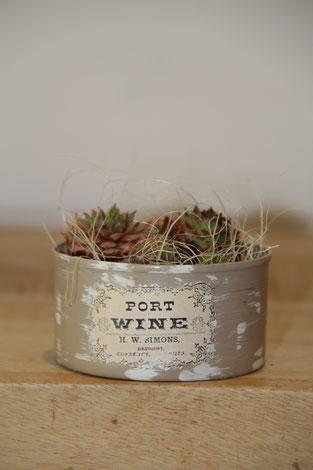 port wine wein dose büchse sukkelente pflanze
