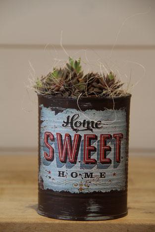 home seet home dose büchse sukkelente pflanze