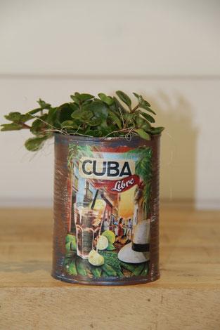 Cuba Libre dose büchse sukkelente pflanze