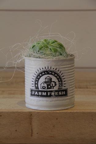farm fresch frisch dose büchse sukkelente pflanze