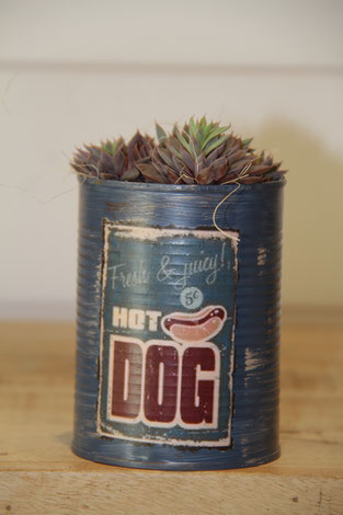 hot dog dose büchse sukkelente pflanze