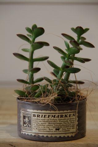 briefmarken alt vintage dose büchse sukkelente pflanze