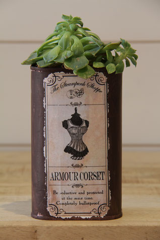amour corset dose büchse sukkelente pflanze