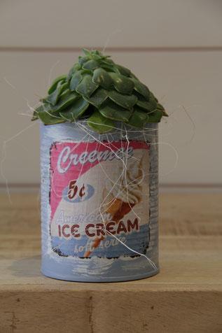 Ice Cream dose büchse sukkelente pflanze