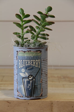 blueberry blau dose büchse sukkelente pflanze
