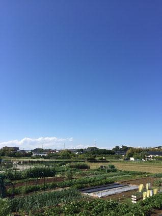 横浜市で農地(田・畑)を相続した時は、農地法第3条の3第1項の届出を農業委員会にする必要があります