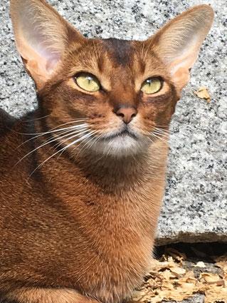 Katze Flora präsent im Jetzt - Craniosacral Therapie für Tiere und Menschen. Heilsam und ganzheitlich.