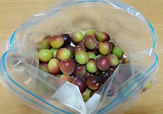 今年は、和歌山の向井農園さんの「紅紫小梅」を入手しました。色も素敵ですが、甘い桃のような香りがなんとも言えません。