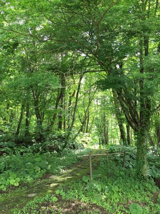 とある森を散策しました
