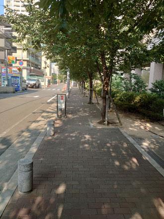木陰の通勤路