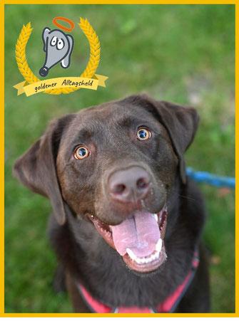 Hundeerziehung Erlangen Labrador