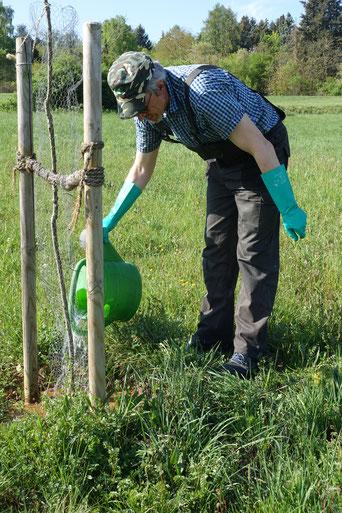 Üppige 50 Liter für den Jungbaum - das reicht für eine Weile