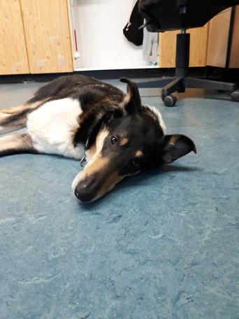 Blade liegt auf dem Fußboden in der Schule und schaut müde und gelangweilt in die Kamera.