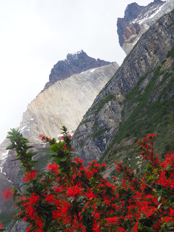 Die Curnos del Paine inklusive dem Feuerbusch