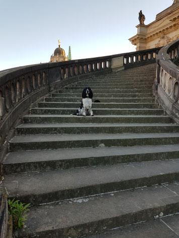 Ob Zelda irgendwann eine Showtreppe hinunterlaufen wird? Foto: Svenja Arendt