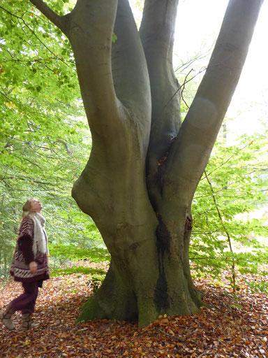 ****DE BEUK WAARIN MARIA AAN MIJ VERSCHEEN**** Catharina, de vrouw naast de boom, heeft mij 28 oktober 2016 uitgenodigd samen op het Begraafpark te wandelen.