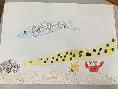 娘が描いた海の生き物たち