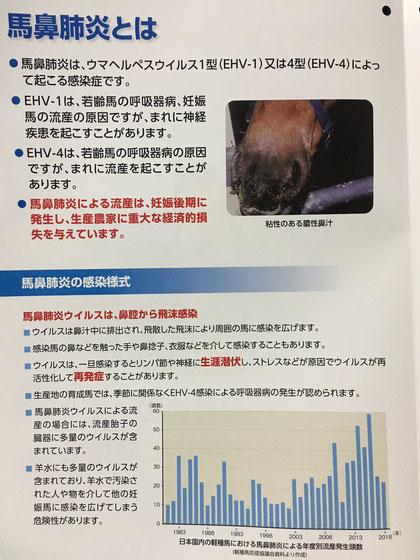 馬鼻肺炎(うまびはいえん)とは