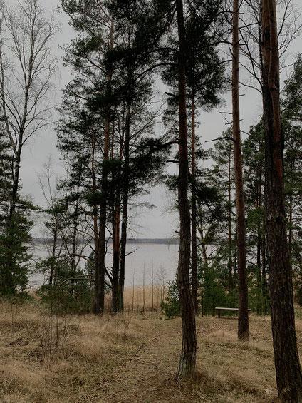 Natur in Lettland