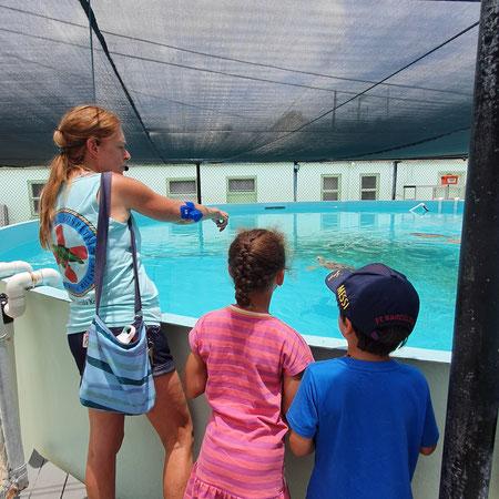 Key West, Marathon, The turtle hospital.
