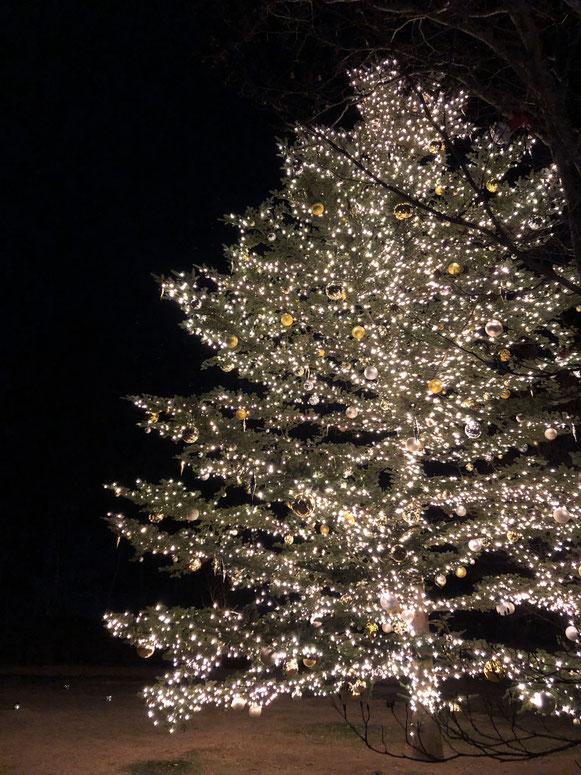 やっぱり今は12月なのか(涙)、、、温泉に来たらクリスマスツリーがありました