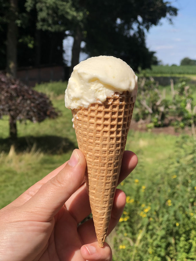 Zitronen-Joghurt-Eis, wie Bottermelk Fresh, Thermomix