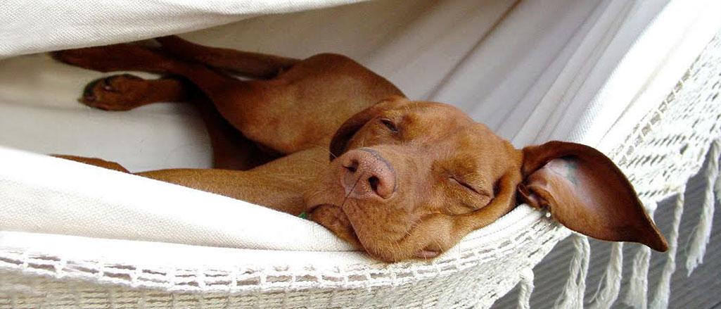 »Hunde leben im Jetzt und möchten dabei jeden Augenblick genießen.« – Ursula Löckenhoff